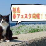相島(猫の楽園)で春フェスタ開催!イベント内容や開催日は?